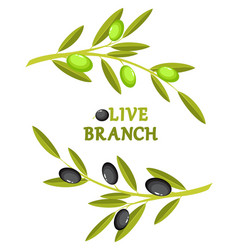 olive branch wreath vector image