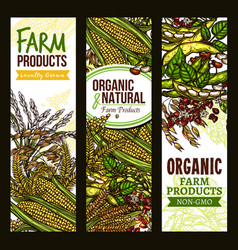 farm grown cereals and grain banner set vector image