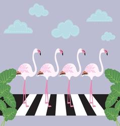 flamingos crossing zebra crossing vector image