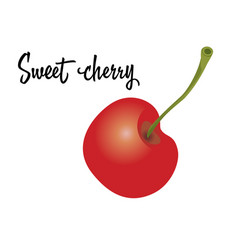 cherry fruit isolated on white background vector image vector image
