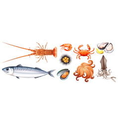 different types of seafood vector image