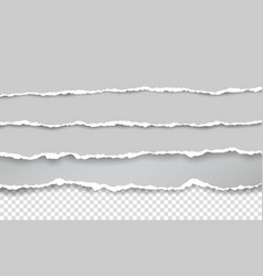 Horizontal torn paper edge ripped squared vector