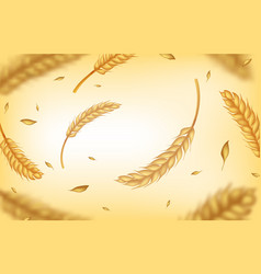 realistic wheat background agricultural harvest vector image