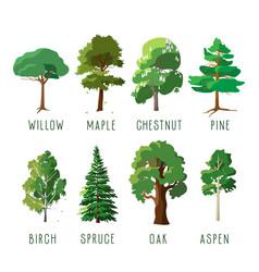 Set isolated trees in summer season vector