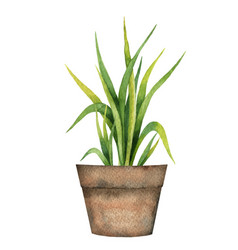 watercolor card with a lemon grass in a vector image