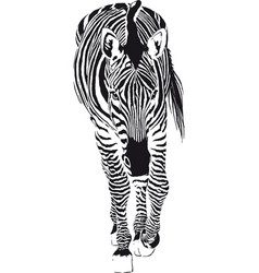 the going zebra vector image vector image