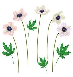 anemone vector image