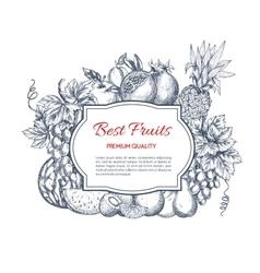 Best fruits harvest sketch poster vector