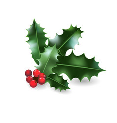 holly christmas element vector image