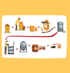 honey production process stages beekeepers vector image