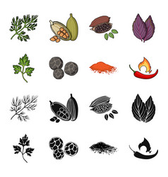 ptrushka black pepper paprika chiliherbs and vector image