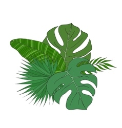 Set of leaves different species palm trees vector image vector image