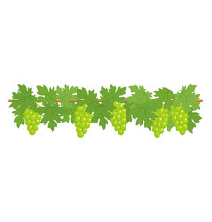 Green grapes border vector