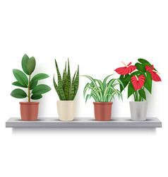 home plants realistic flowers with leaves in pots vector image