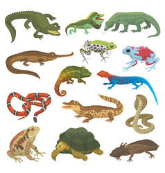 Reptile nature lizard animal wildlife wild vector