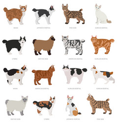 Short tail type bob cats domestic cat breeds and vector