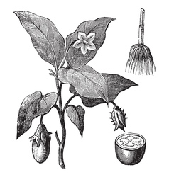 Vintage tree woodcut vector image vector image