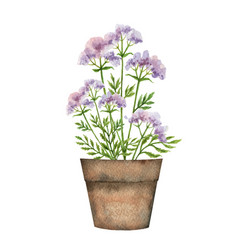 Watercolor card with a valerian in a vector