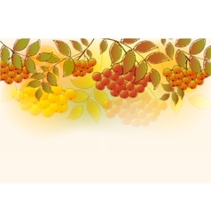 Border of bunches rowan and leaves EPS10 vector image