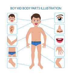 boy kid body parts vector image