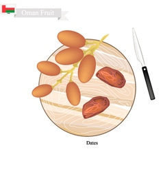 Dates Fruit A Popular Fruit in Oman vector image