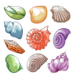 Underwater and sea tropical shells bright vector