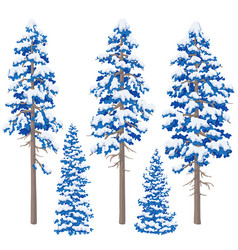 Winter conifers set vector