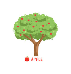apple garden fruit tree with red apples and name vector image