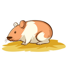 cute hamster on white background vector image