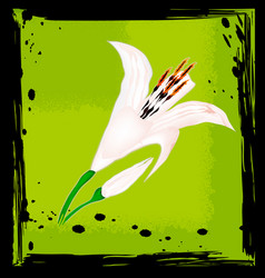 Abstract green and lily vector