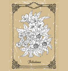 black and white drawing belladonna flowe vector image