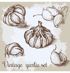 Hand drawn garlic set Vintage retro background vector
