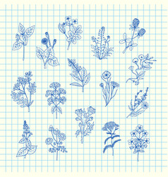 hand drawn medical herbs set on blue cell vector image