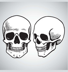 Hand drawn skull set vector