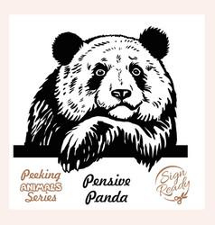 peeking pensive panda - funny panda out vector image