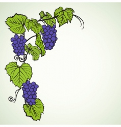 grape background vector image vector image