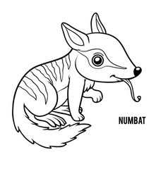 coloring book numbat vector image