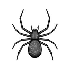 spider black arachnid on white background vector image