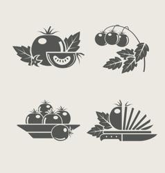 tomato set icons vector image