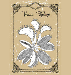 Black and white drawing venus flytra vector
