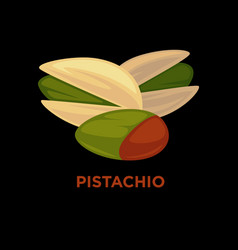 pistachio nut cartoon vector image