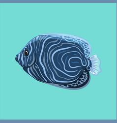 surgeonfish vector image