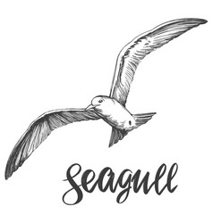 Bird seagull wildlife hand drawn vector