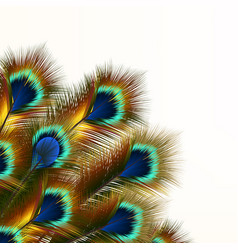 Fashion background with peacock feathers vector