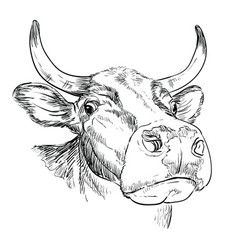 Head funny bull in perspective drawing vector