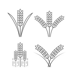 icon rice vector image