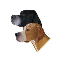 portraits of english pointer dogs vector image