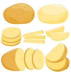 Raw potatoes set vector