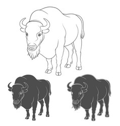 set black and white images with a bison vector image
