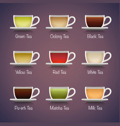 Tea Types Infographics vector image